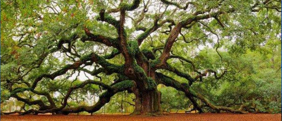 06_tree